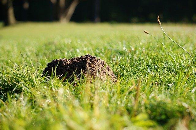 siatka pod trawnik